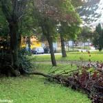 45 alberi sotto sorveglianza