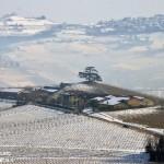 Italia nostra critica la Regione. Pochi alberi monumentali inseriti nel registro