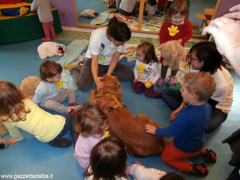 Pet Therapy Nido_1