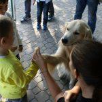 Gli animali ti migliorano la vita