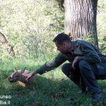 Vigilanza faunistica e ambientale: liberati caprioli intrappolati nel Roero