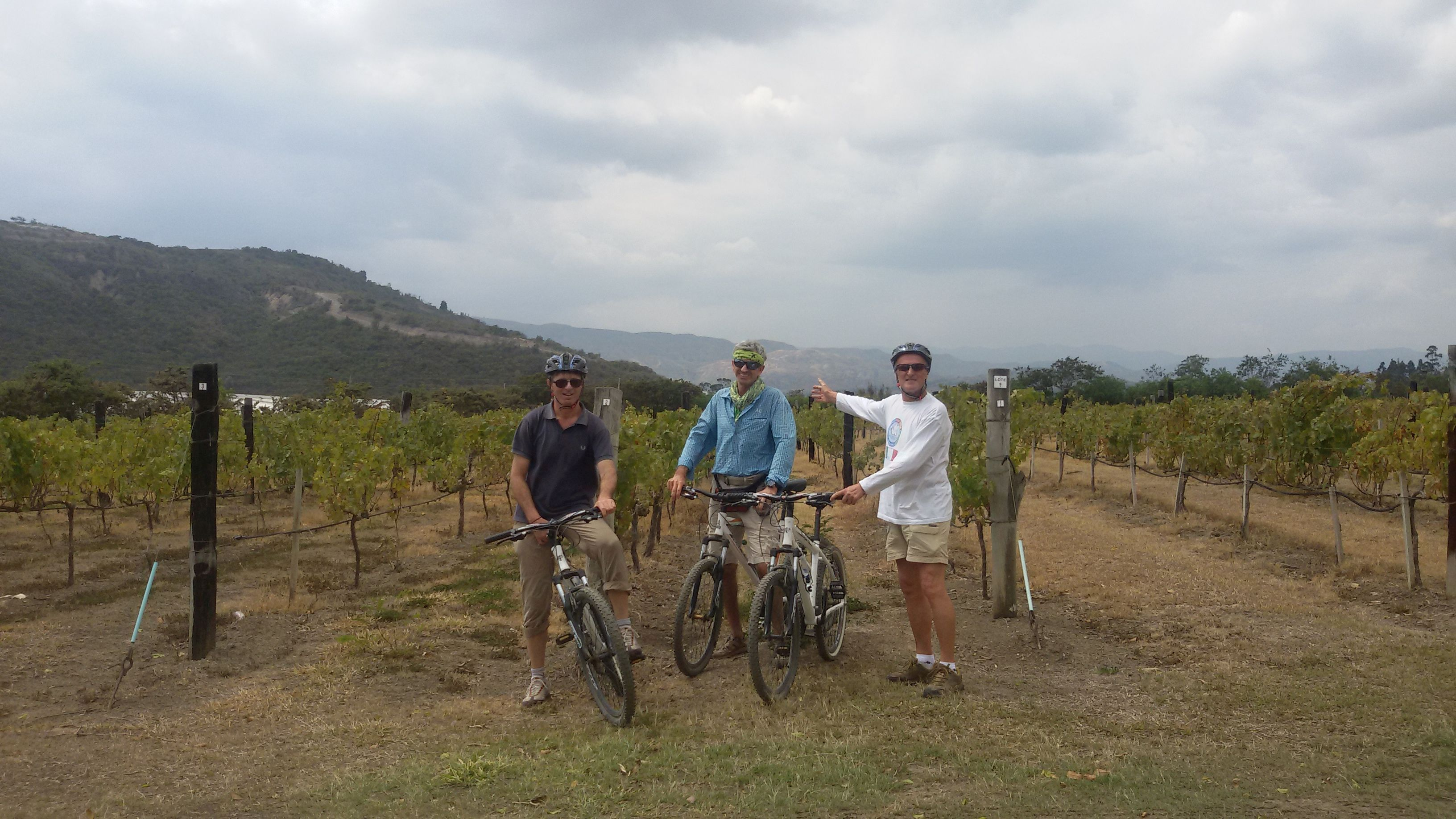 vigne in colombia -berbotto