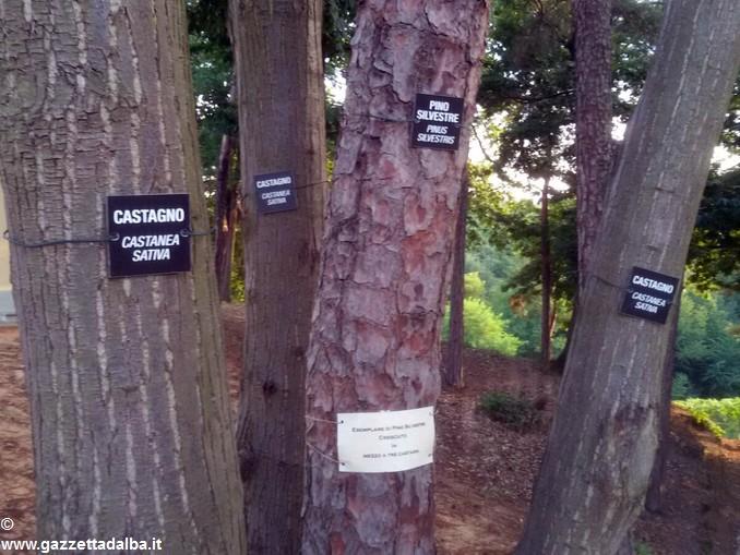 Giardino Botanico ai Piloni di Montà (6)