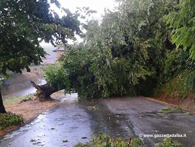 Grandine nell'albese: danni alle viti nel Barolo, alberi sradicati nel Roero