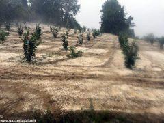 Grandine su vigne e noccioleti: danni limitati 1