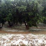 Grandine su vigne e noccioleti: danni limitati