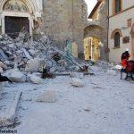 Sisma centro Italia: i cani da ricerca dell'Anc sono ad Amatrice