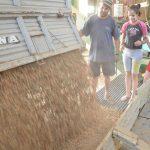 Nocciole: a Castagnole pagate 420 euro al quintale