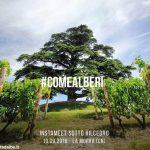 Con Instagram alla scoperta del cedro del Libano