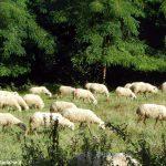 Nasce a Paroldo il corso per diventare pastori