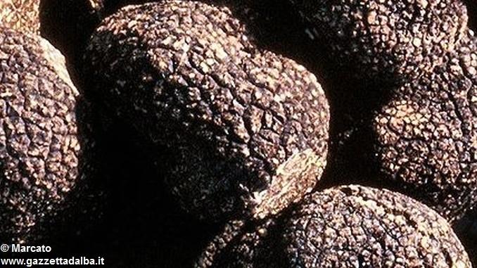 Sequestrati trenta chili di tartufi nel Cheraschese