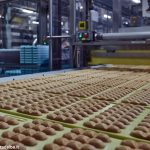 Bilancio Ferrero Italia: +5% di fatturato, utili oltre i 200 milioni. Premio legato agli obiettivi: 1.921 euro