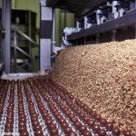 Torna a crescere il fatturato di Ferrero Italia a 1.450 Milioni di Euro