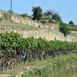 Slow Food valorizzerà il vino dei terrazzamenti