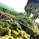 L'export del vino sabaudo supera il miliardo di euro