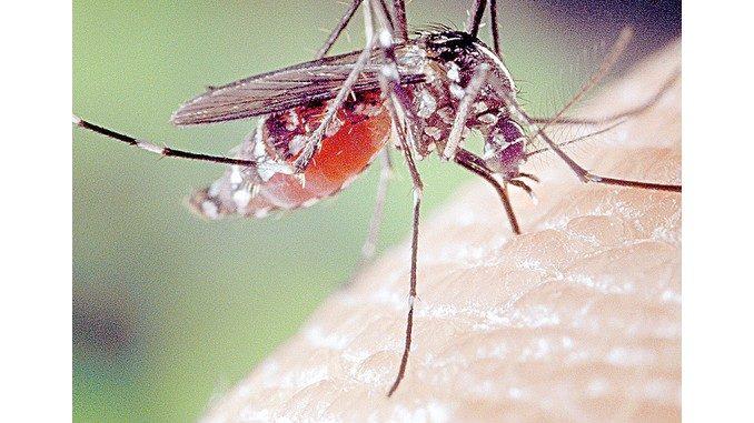 La zanzara tigre impazza, il Comune disinfesta