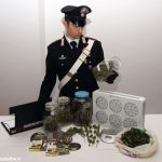 Coltivava marijuana in cantina, arrestato un trentenne