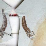 Il fossile del gobius ignotus in dono al museo Craveri