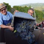 I valori delle uve sono stabili o in aumento