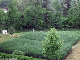 Rocce e vegetali per gli scarichi delle cantine enologiche