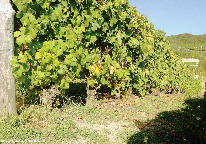 I valori delle uve sono stabili o in aumento 1
