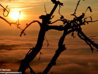 Dolce nebbia. Ecco le foto più belle degli orizzonti di Langa 6