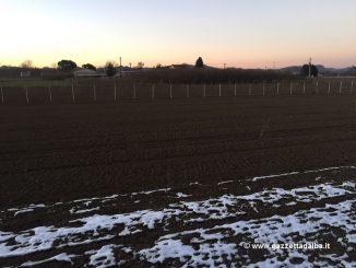 Rubati 40 piantini di nocciola a San Cassiano di proprietà del consigliere Prunotto