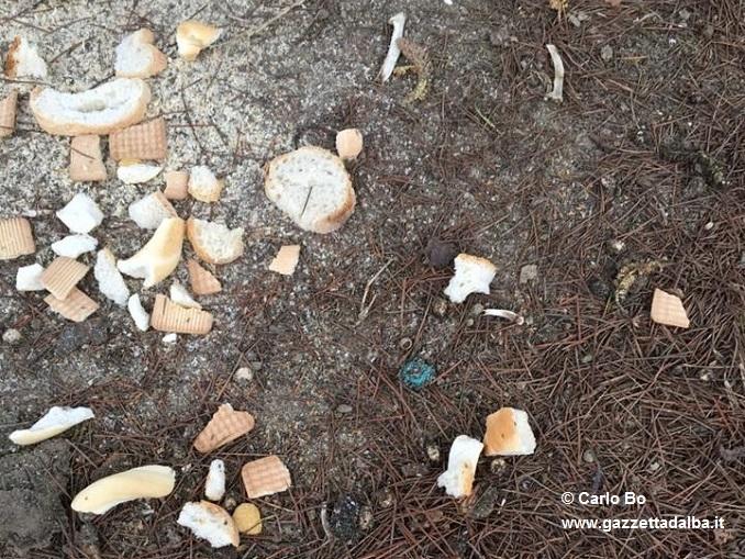 Bocconi avvelenati nell'area verde di via Aldo Moro, intervengono Bo e Prunotto