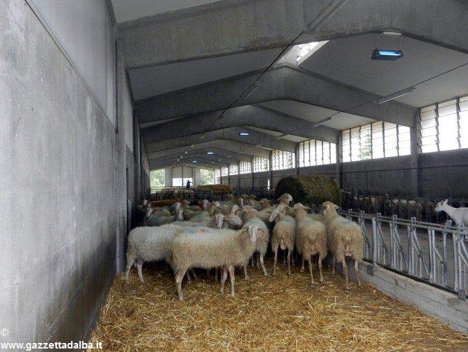 Formaggio Murazzano Dop e pecora di Langa in onda su Canale 5