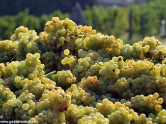 Moscato: ci sono altre possibilità oltre ai vini dolci