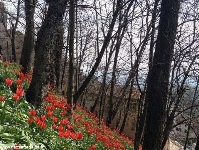 Tulipani a corte Govone 2