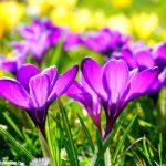 Come il fiore nel campo: meditazioni a San Rocco Seno d'Elvio