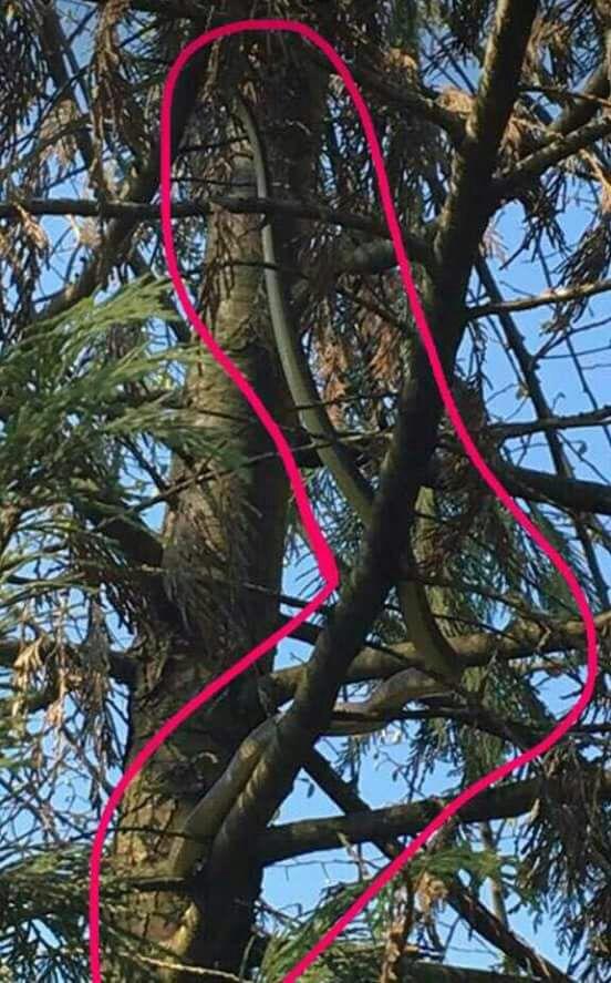 Un ospite inatteso tra gli alberi del giardino della scuola di Canale 2