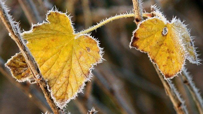 Brina sulle foglie-foto d'archivio