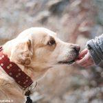 I detenuti del carcere albese imparano la pet therapy