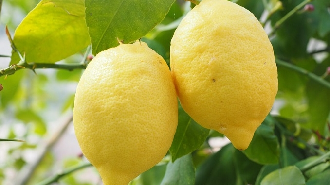 Nasce la collaborazione tra Ferrero e il consorzio del limone di Siracusa Igp