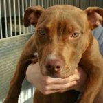 Gli Amici di zampa chiedono aiuto per Xina, la cucciola abbandonata con una zampina rotta