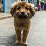 L'appello dei volontari del canile di Guarene contro l'abbandono dei cani