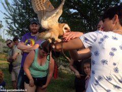 Un giorno per imparare a fotografare i rapaci con i Falconieri dei 4 venti 5