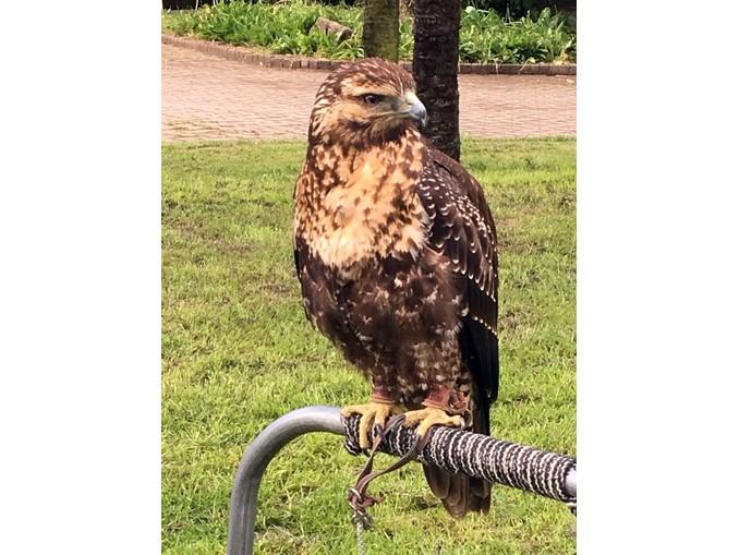 falconieri dei 4 venti (9)