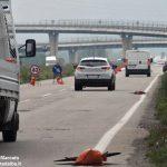 Manutenzione dei ponti: Carlo Bo torna a puntare il dito