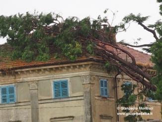 Ceresole: raffiche di vento e grandine causano ingenti dannia colture e abitazioni