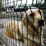 Conclusa operazione contro il traffico internazionale di cuccioli di cane