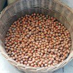 Nocciole: produzione italiana in calo. Crescono la Turchia e la Georgia