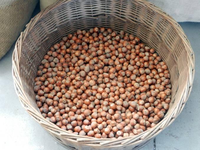 Nocciole: convegno a Cherasco su mercato, qualità e prospettive