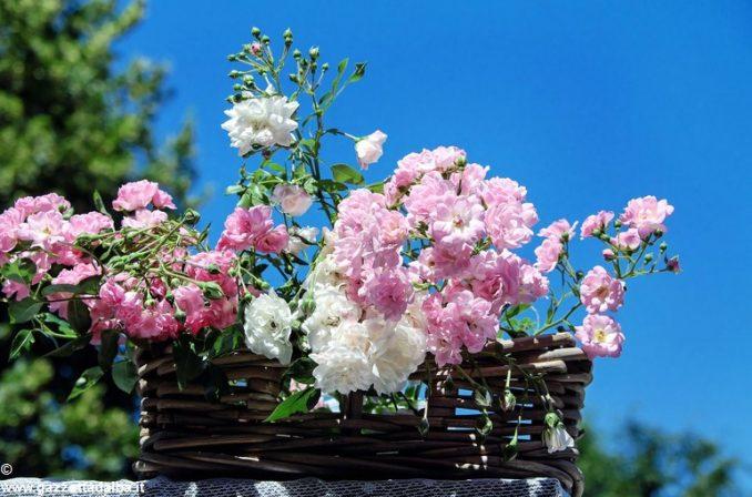 Domenica 11 giugno, la festa delle rose con 700 piante in fiore