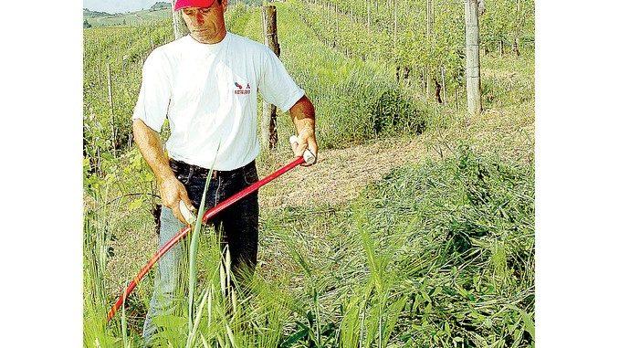 Nelle vigne delle Langhe torna lo sfalcio manuale