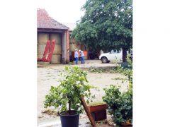 Ceresole: raffiche di vento e grandine causano ingenti danni a colture e abitazioni 15