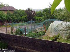 Ceresole: raffiche di vento e grandine causano ingenti danni a colture e abitazioni 6