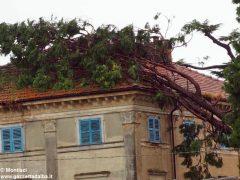 Ceresole: raffiche di vento e grandine causano ingenti danni a colture e abitazioni 8